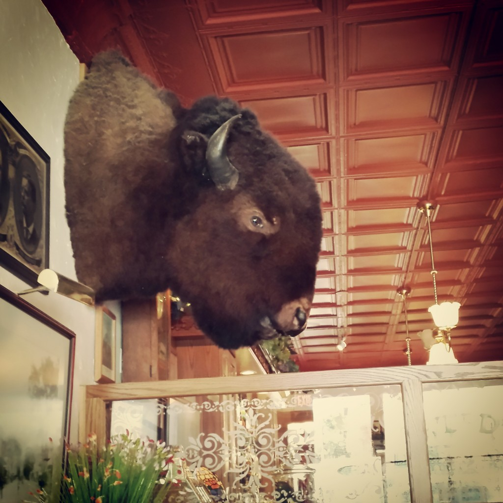 Teddy's Bison Head