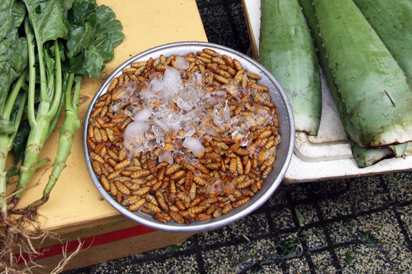 larvae, used for food prep