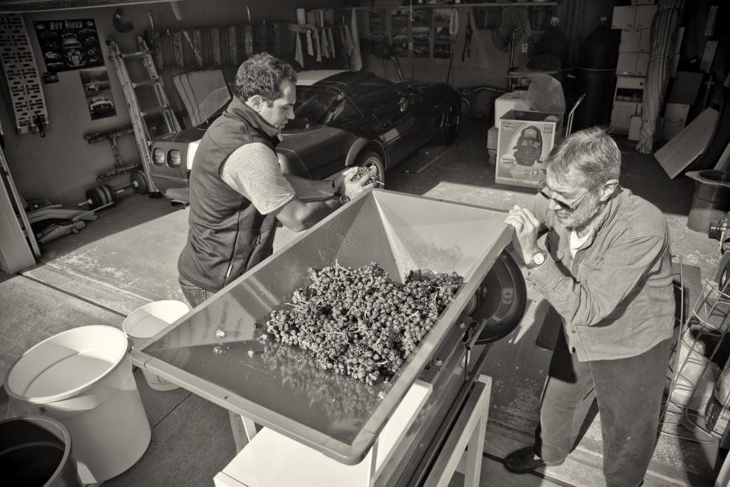 grapes 015