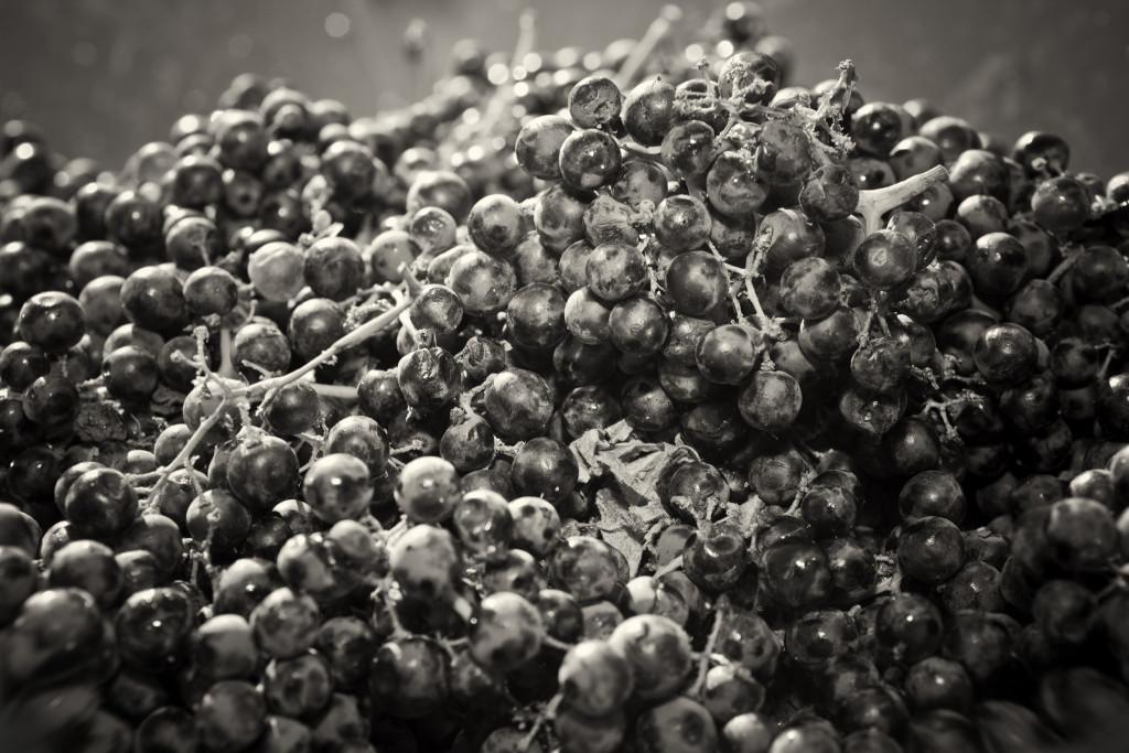 grapes 022