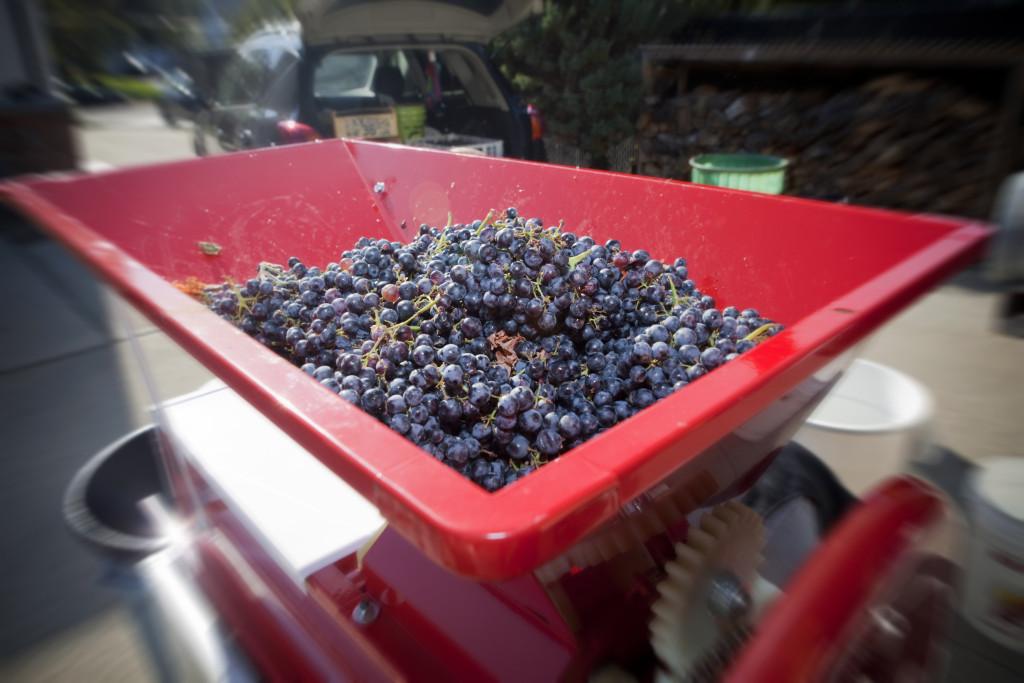 grapes 023