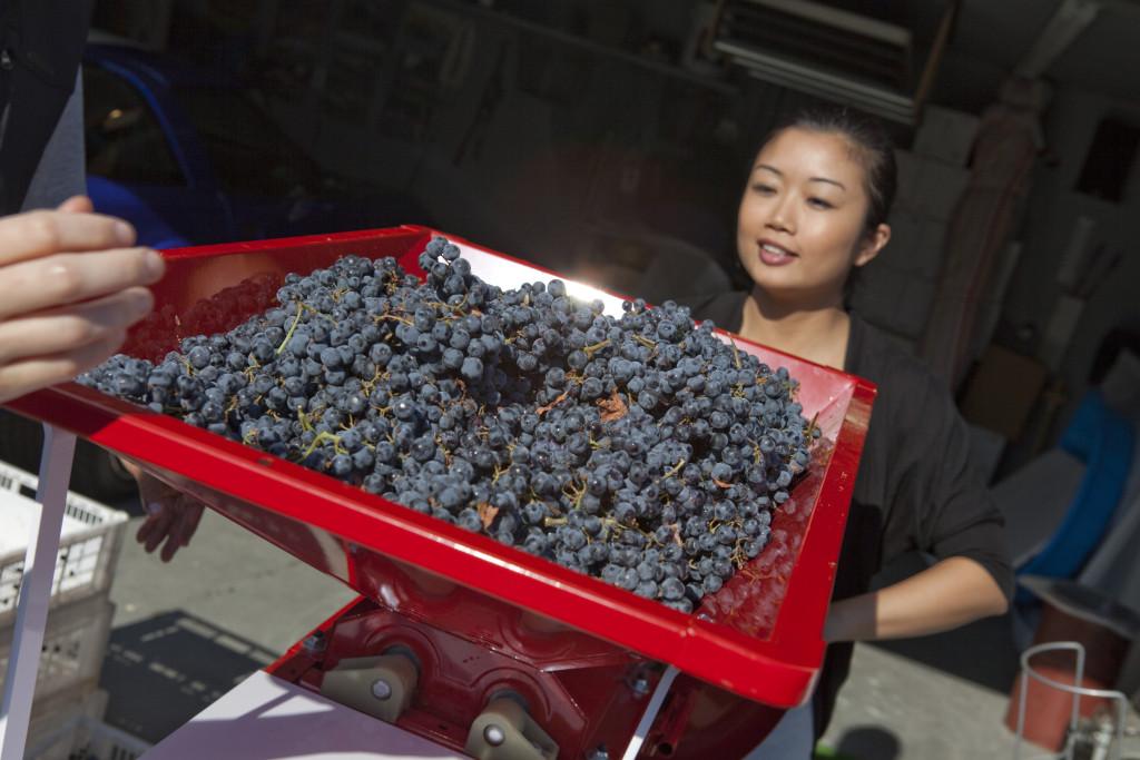 grapes 034