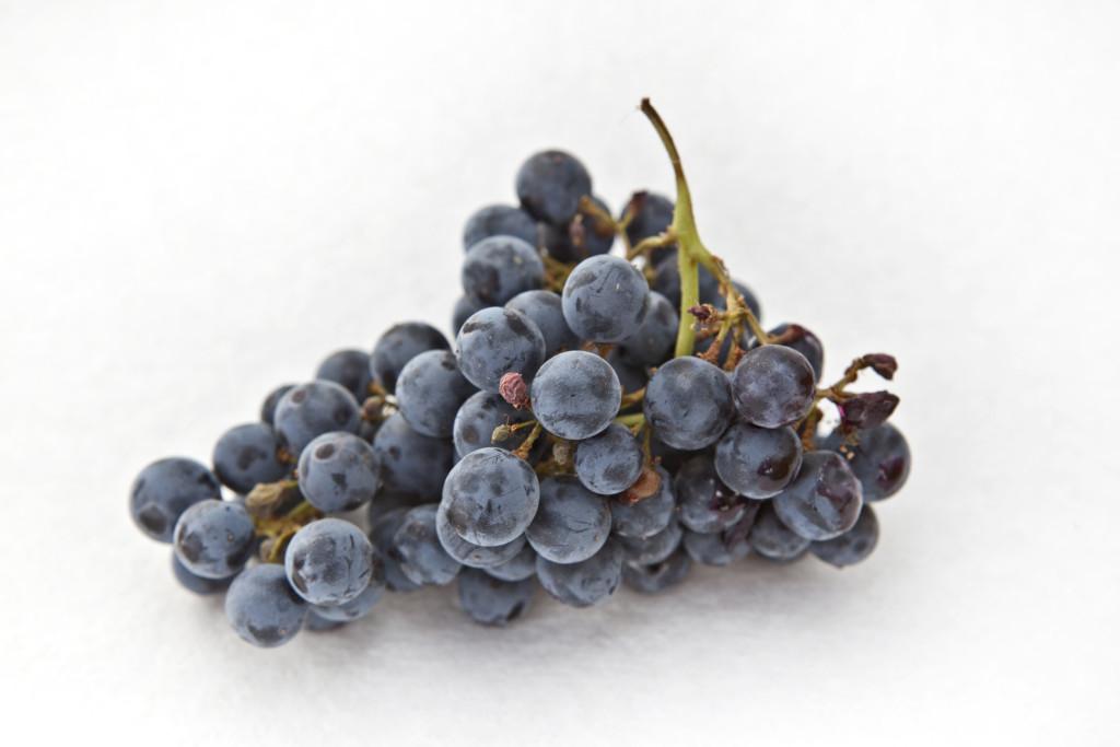 grapes 052 edits