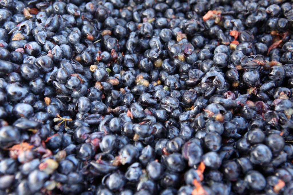 grapes 074