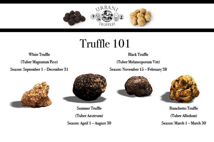 truffle-101